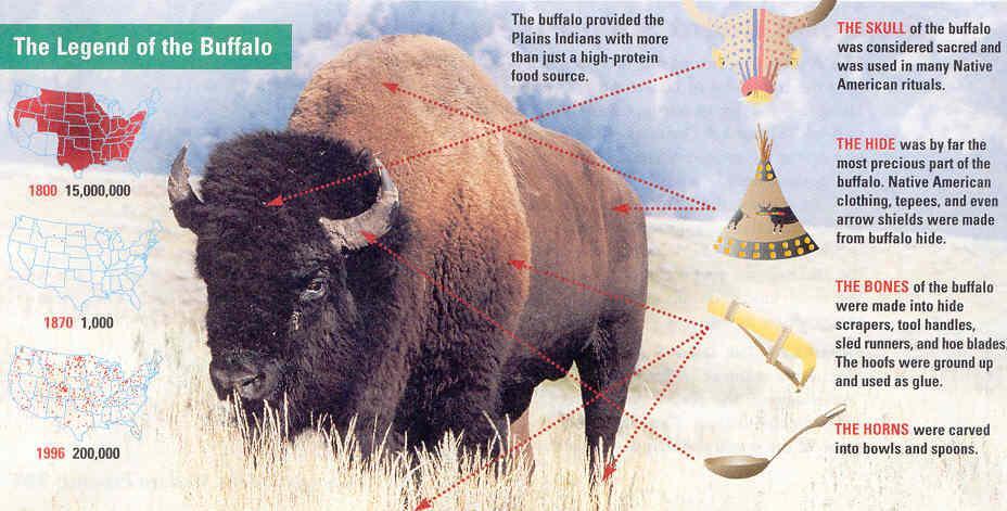 use of buffalo by the native